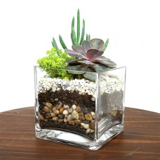 DIY Succulent Terrarium Cube Vase Kit set of 3 Cube